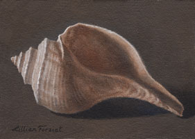 Channel Whelk