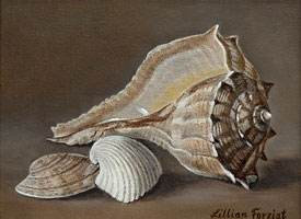 Lightning Whelk, Clam & Caribbean Arc