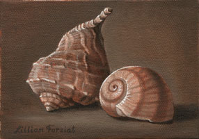 Whelk & Shark's Eye Snail