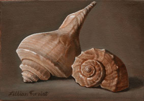 Channel Whelk & Lightning Whelk