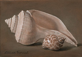 Channel Whelk & Leopard Snail